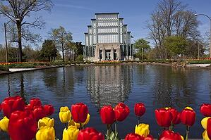 jewel box with tulips